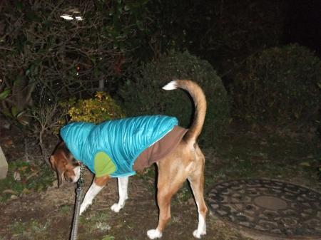 20130108夜散歩02