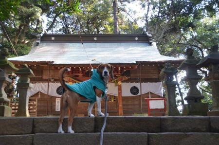 20130123麻賀多神社(成田市台方)05