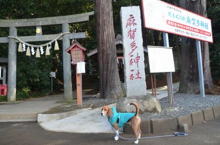 20130123麻賀多神社(成田市台方)01.
