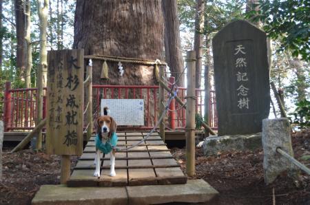 20130123麻賀多神社(成田市台方)08