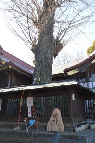 20130127麻賀多神社 鏑木08
