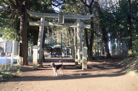 20130202麻賀多神社大蛇04