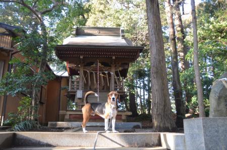 20130202麻賀多神社大蛇08