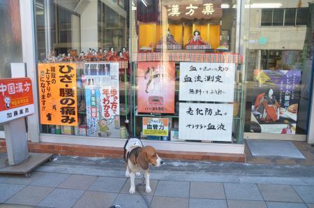20130223石岡雛巡り34
