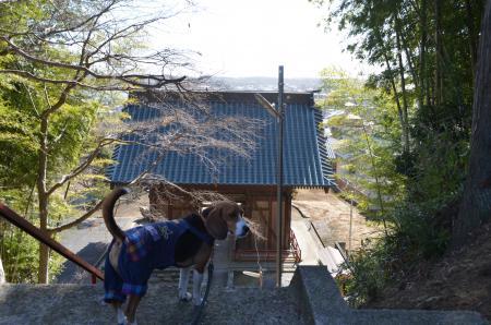 20130224江戸崎八景 医王山の暮雪07