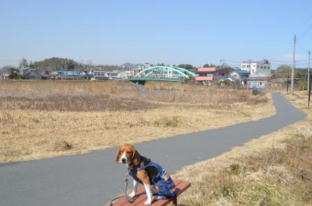 20130224江戸崎八景 高田の落雁06