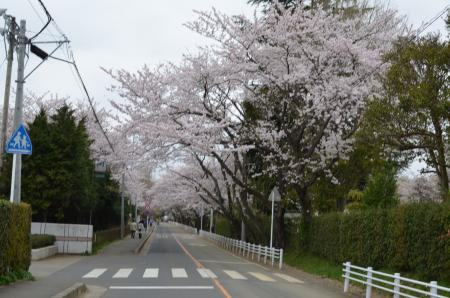 20130330佐倉城址公園09