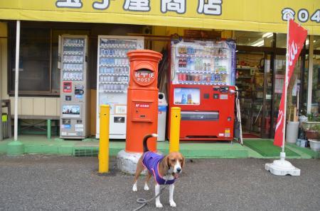 20130411鎌ヶ谷丸ポスト08