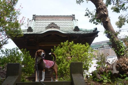 201230414実籾城址03