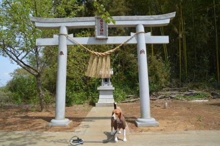 20130414摩賀多神社 八千代04