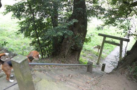 20130418妙見神社16