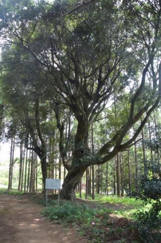 20130418将門口ノ宮神社05