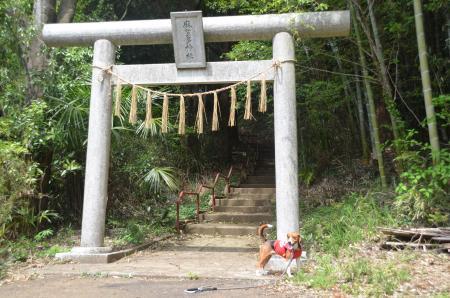 20130418麻賀多神社大佐倉03