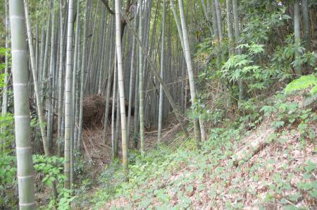 20130418麻賀多神社大佐倉15
