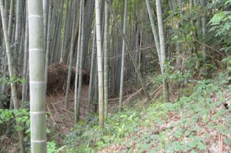 20130418麻賀多神社大佐倉16