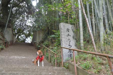 20130418麻賀多神社大佐倉14