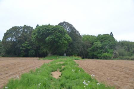 20130430桔梗塚12