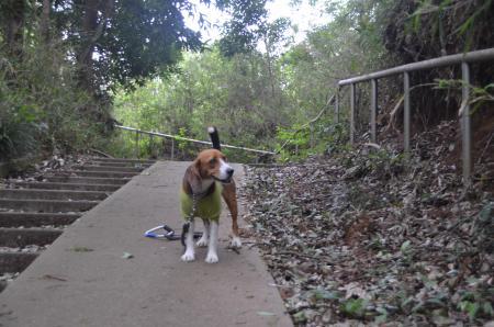 20130430天使の森公園02