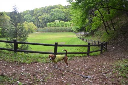 20130430天使の森公園11
