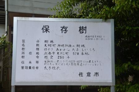 20130502神明大神社05