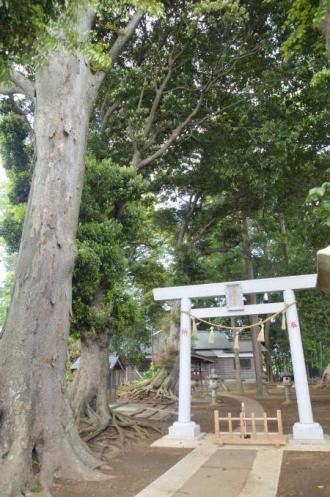 20130502神明大神社07