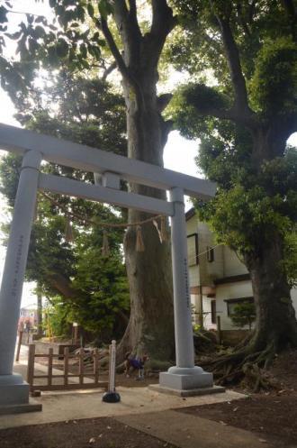20130502神明大神社18