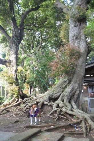 20130502神明大神社20