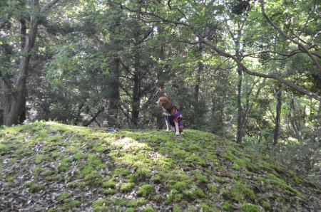 20130502天使の森公園07