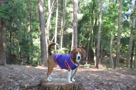 20130502天使の森公園14