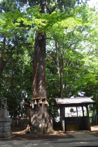 20130501麻賀多神社 城11