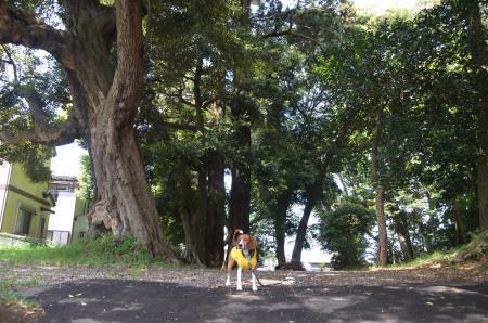 20130501麻賀多神社 城09