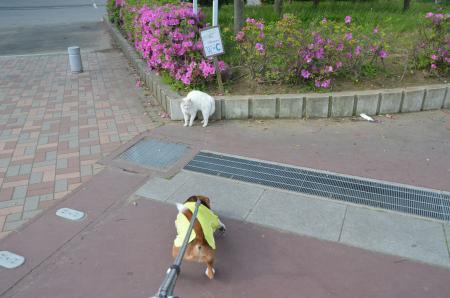 20130506袖ヶ浦公園02