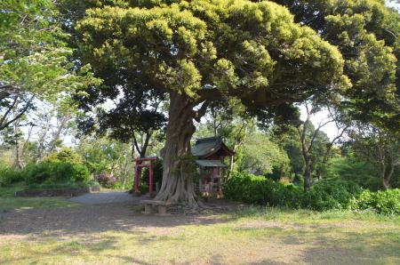 20130506袖ヶ浦公園11
