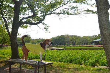 20130506袖ヶ浦公園17