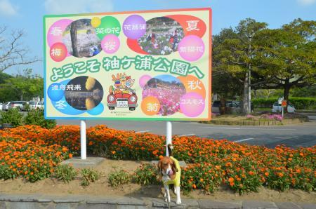 20130506袖ヶ浦公園25