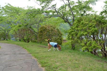 20130512田貫湖02