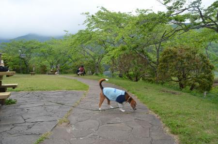 20130512田貫湖01