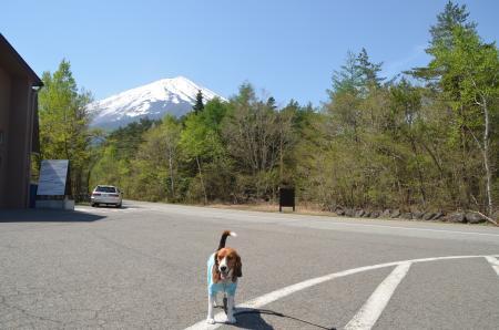 20130513富士山五合目02