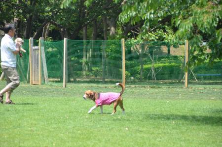 20130518柏の葉公園ドッグラン02