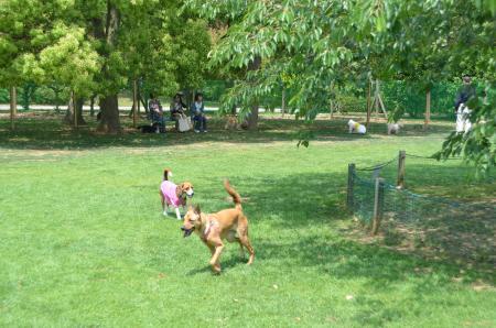 20130518柏の葉公園ドッグラン11