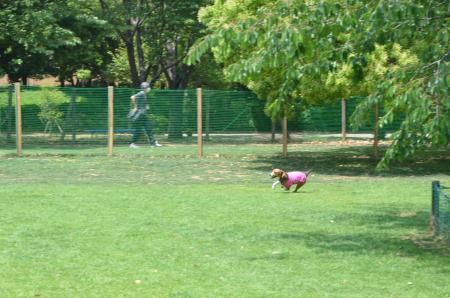 20130518柏の葉公園ドッグラン12