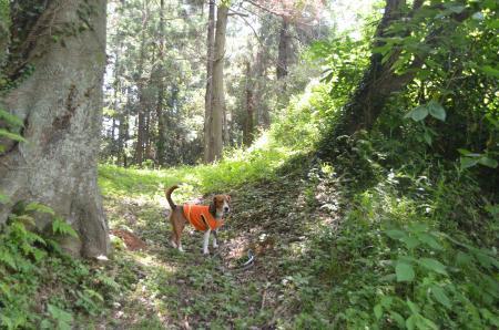 20130601歩崎森林公園15