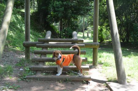 20130601歩崎森林公園24