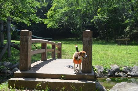 20130601歩崎森林公園22