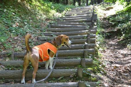 20130601歩崎森林公園21
