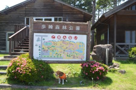 20130601歩崎森林公園28
