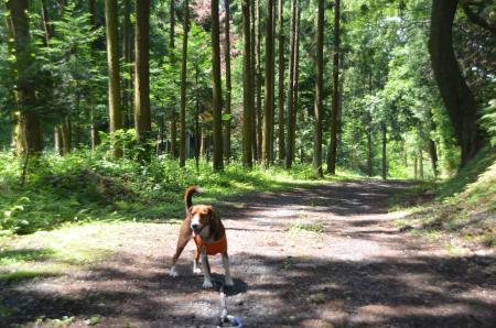 20130601歩崎森林公園26