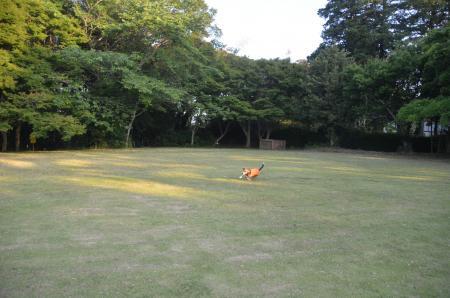 20130603激走羽黒山公園05