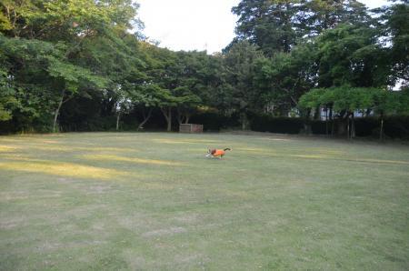 20130603激走羽黒山公園04