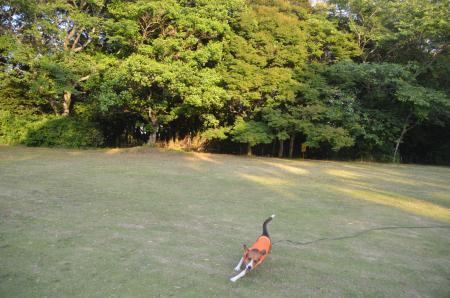 20130603激走羽黒山公園07